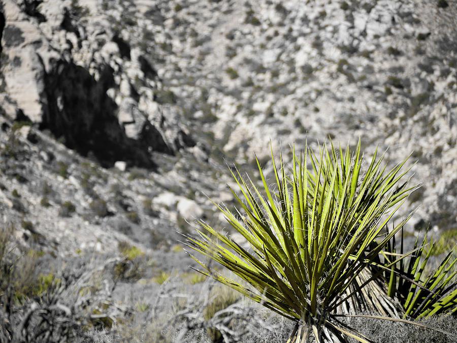 America Digital Art - Desert Green by Rae Tucker