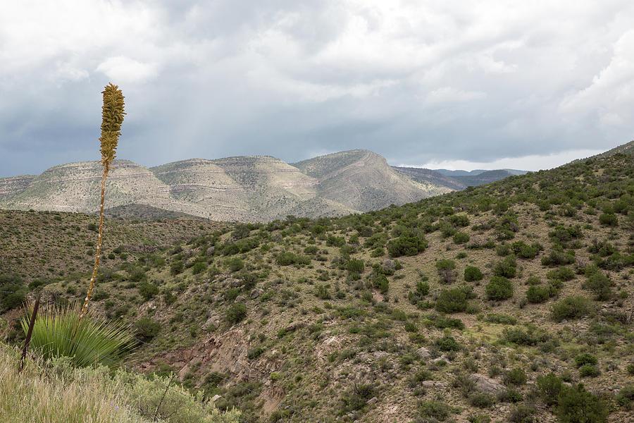 Desert High by Sara Hudock