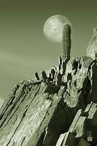 Cactus Photograph - Desert Icon by Davin Lavikka