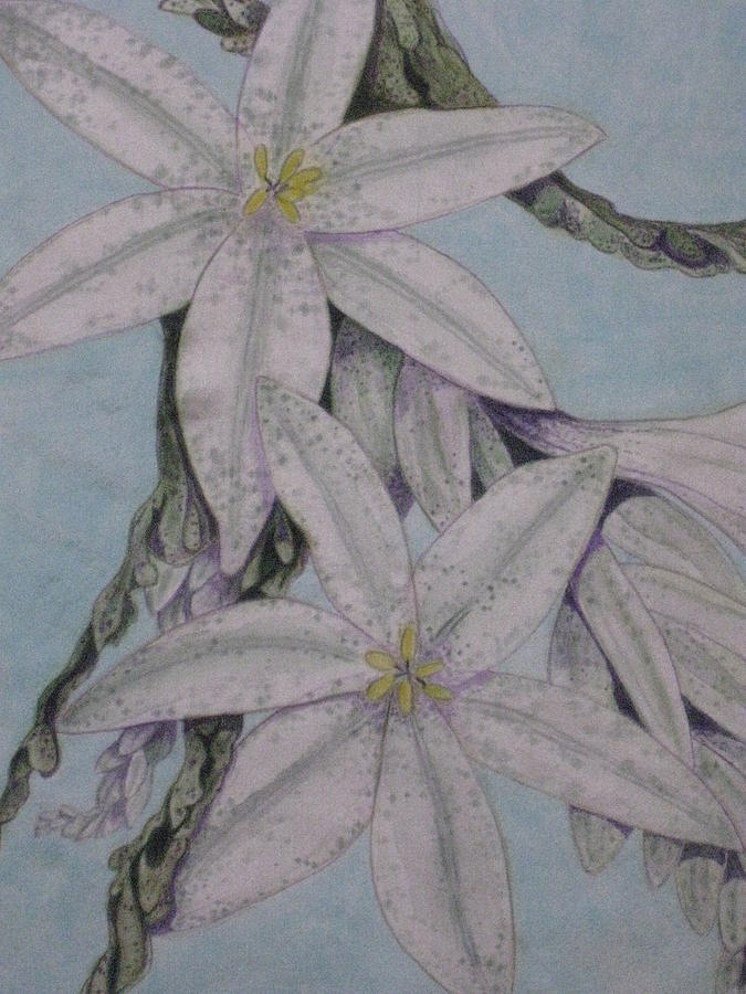 Floral Painting - Desert Lillie  Close-up by David Kelly