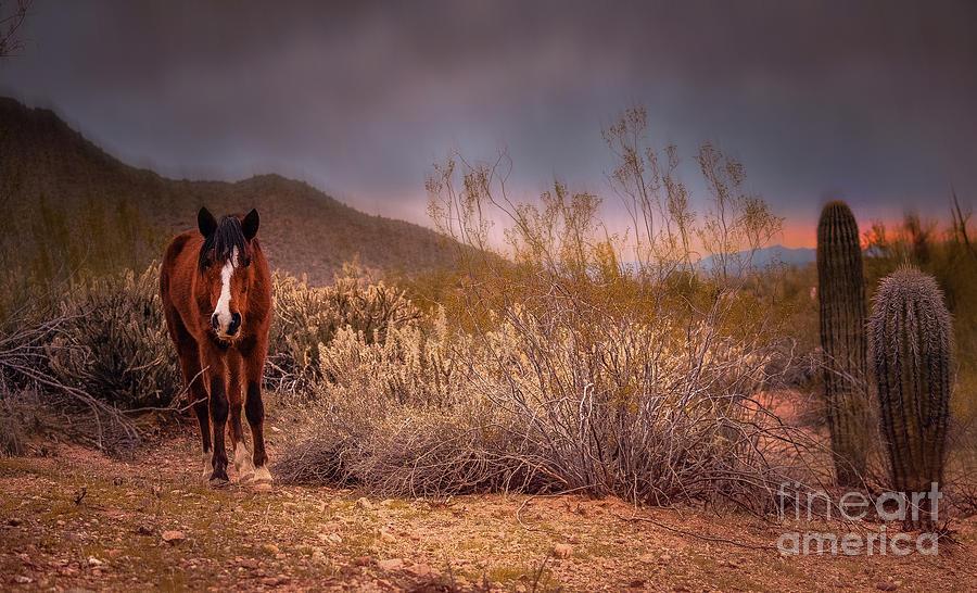 Desert Mustang Photograph