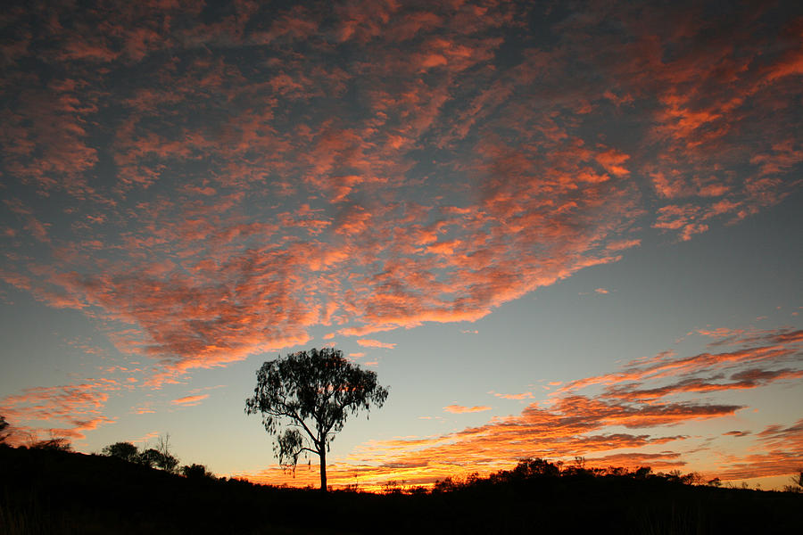 Desert oak tree silhouetted at sunrise by Keiran Lusk