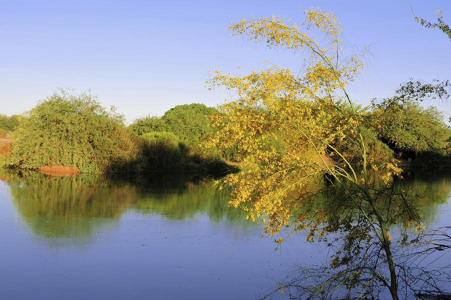 Desert Oasis Photograph