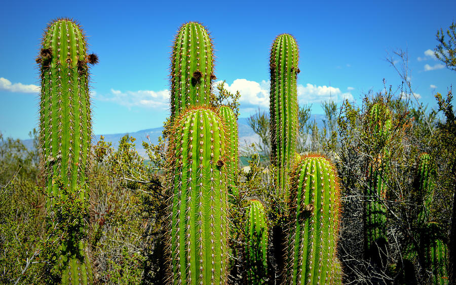 Desert Plants All In The Family Photograph By Glenn Mccarthy