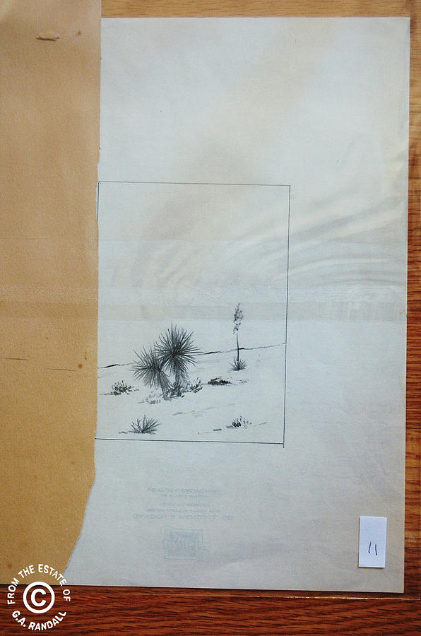 G.a. Randall Drawing - Desert Plants by Smart Healthy Life