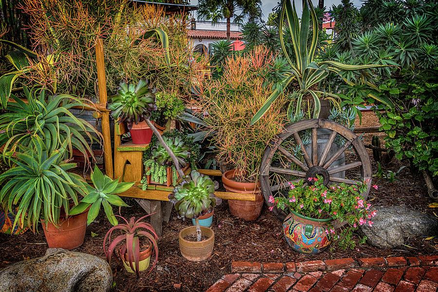 Desert Plants Old Town San Diego Ca 7r2 Dsc3181 17 01 14