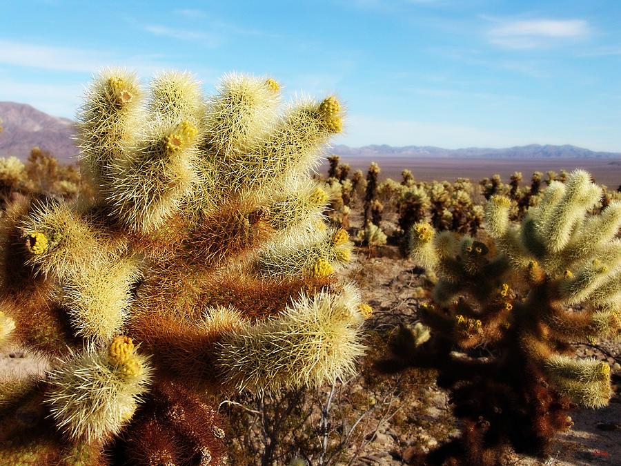 Glenn Mccarthy Photograph - Desert Plants - Porcupine Cholla by Glenn McCarthy
