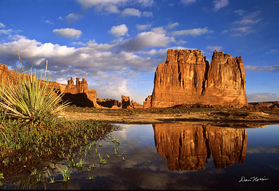Arches National Park Photograph - Desert Reflections by Dan Norris