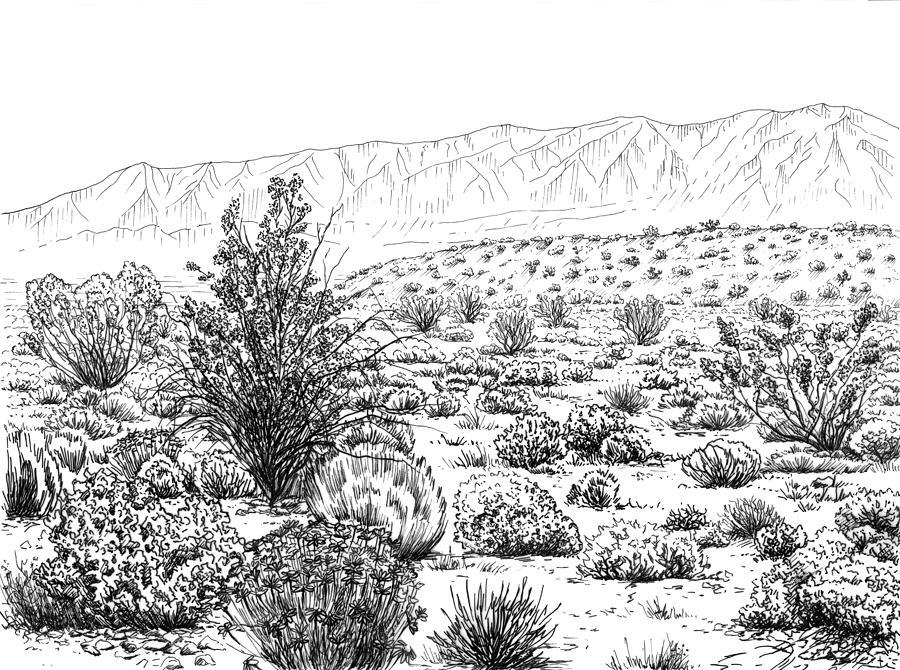 Desert Drawing - Desert Scrub Ecosystem by Logan Parsons