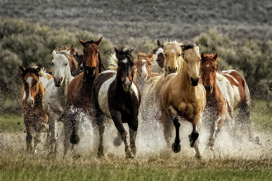 Desert Showers by Joan Davis