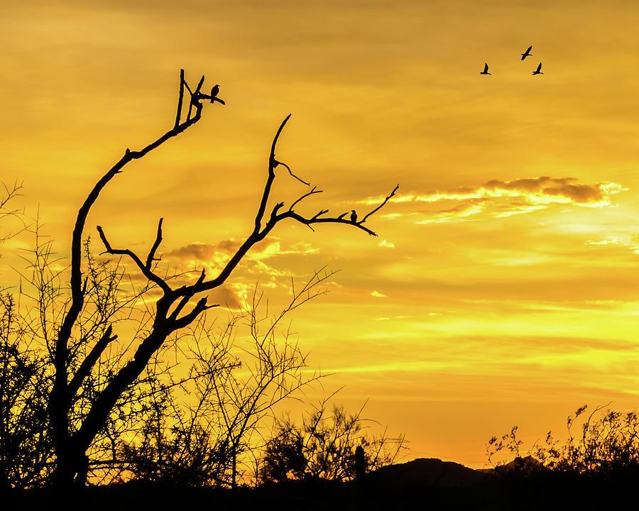 Desert Silhouettes by Ken Mickel