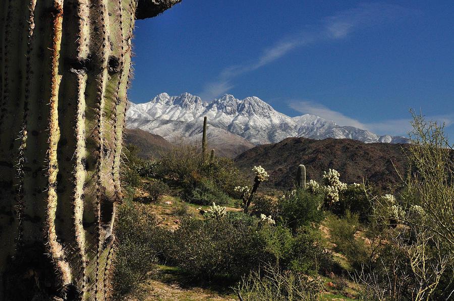 Arizona Desert Photography Photograph - Desert Snow by John Gee