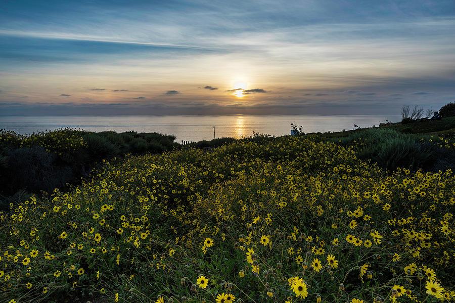Landscape Photograph - Desert Sunflowers Coastal Sunset 2 by Scott Cunningham
