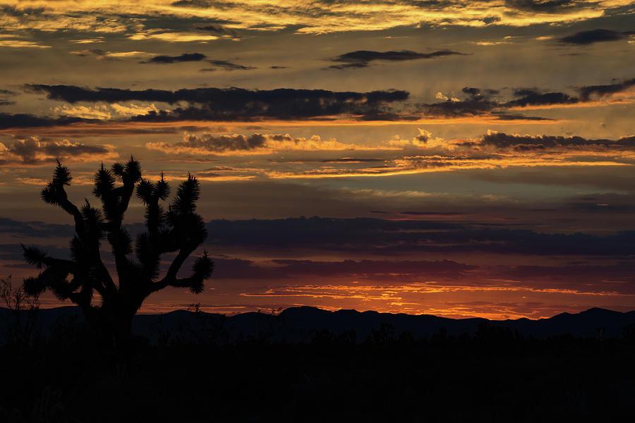Sunset Photograph - Desert Sunset by Carol Davis