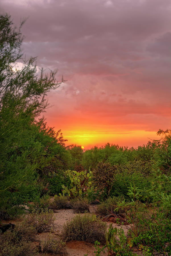 Desert Sunset V1836 Photograph