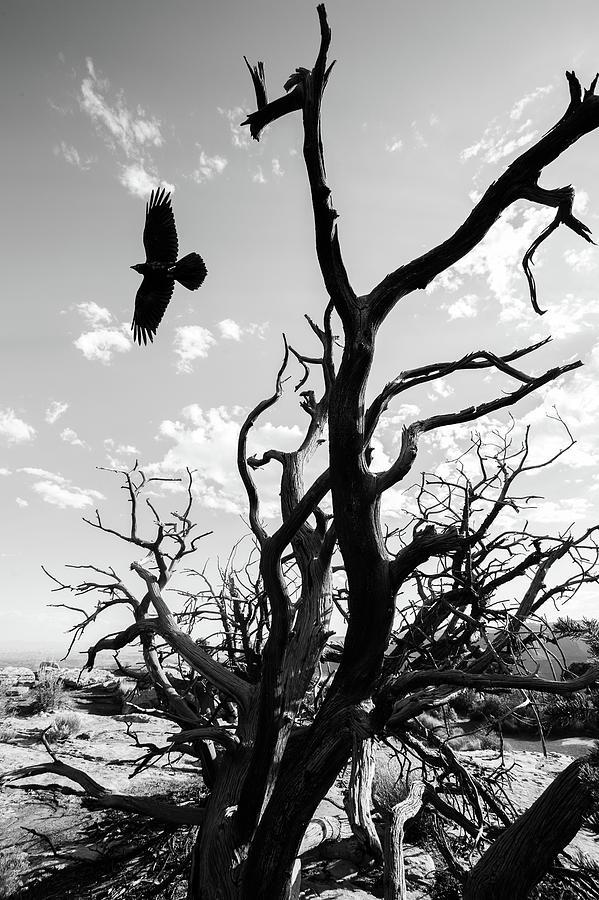 Desert Takeoff Photograph