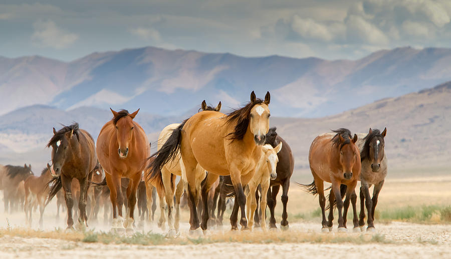 Image of: Camels Desert Travelers Pixels Desert Travelers Photograph By Kent Keller