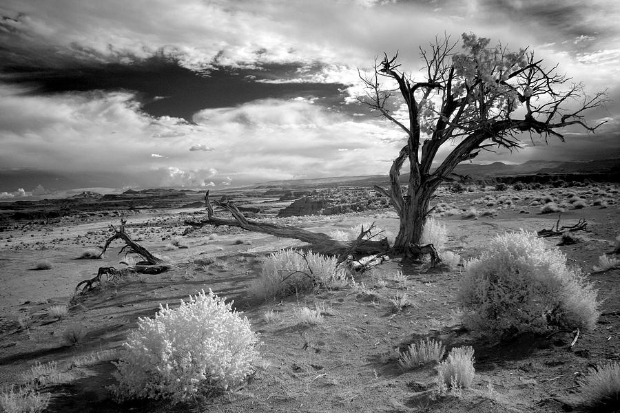 Infra Red Photograph - Desert Tree by G Wigler