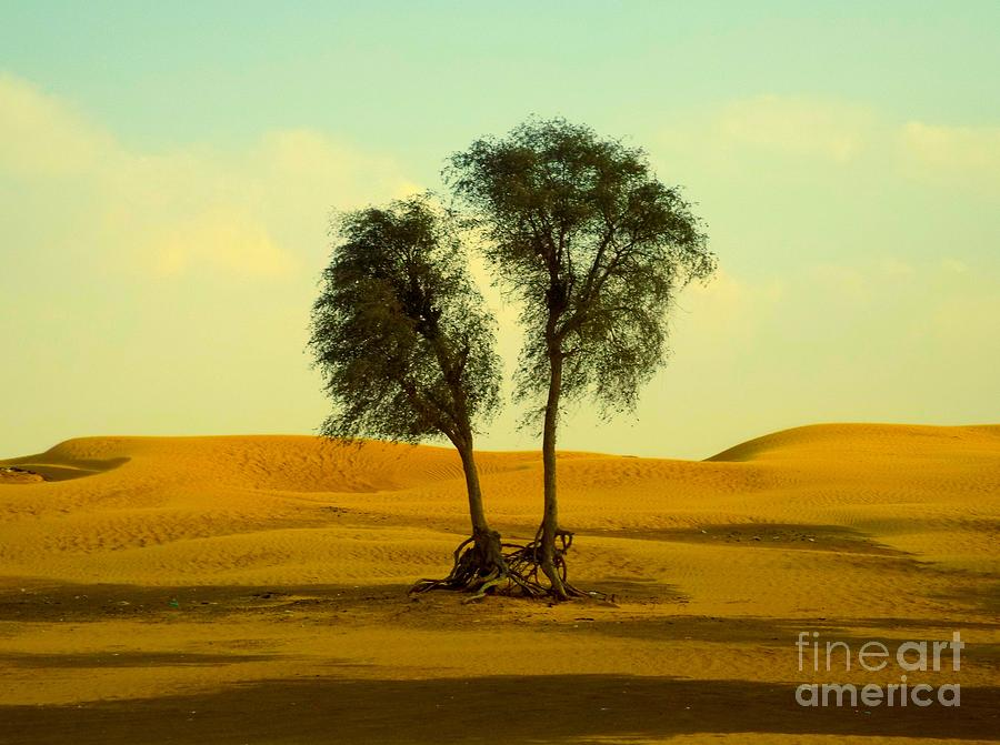 Landscape Photograph - Desert Trees by Barbara Von Pagel