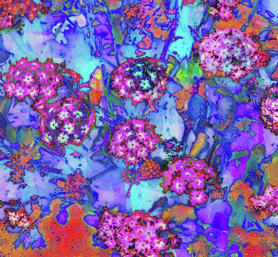 Photo Photograph - Desert Vibe Bloom by Michael Hope