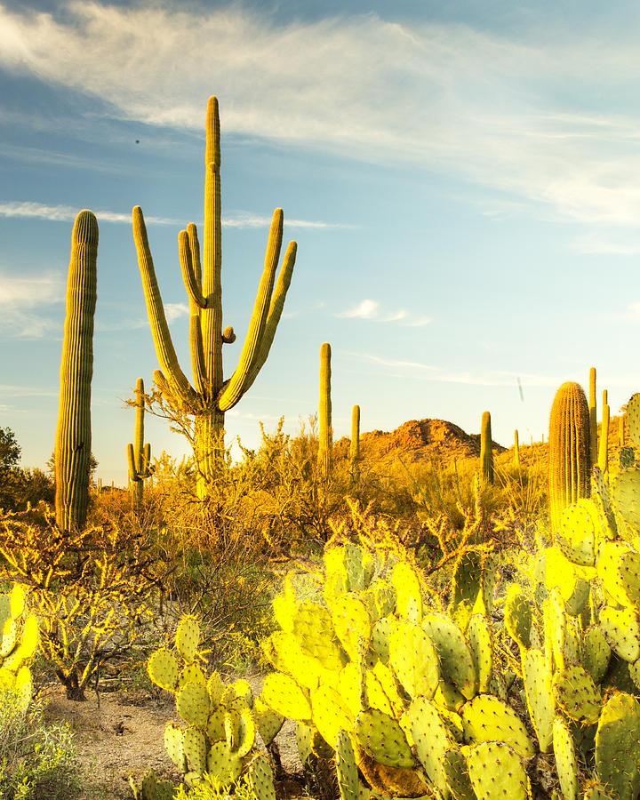 Cactus Photograph - Desert View by Matt Cohen