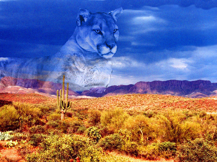 Cats And Animals Photograph - Desert Visions by Lorraine Foster