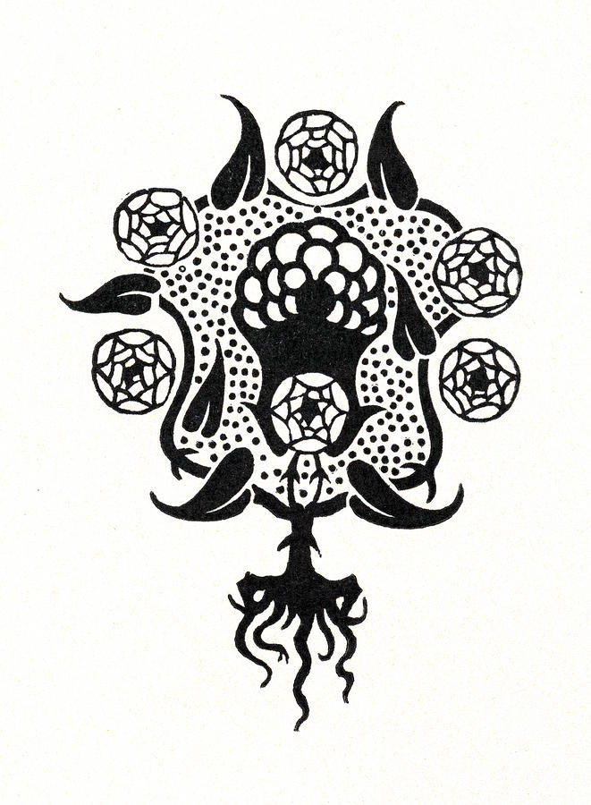 Motif Drawing - Design For The Front Cover Of Salome by Aubrey Beardsley