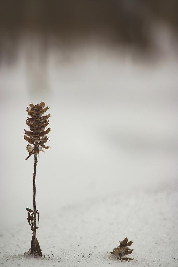 Desolated Photograph