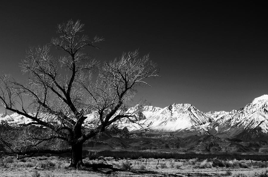 Tree Photograph - Desolation by Jessica Roth
