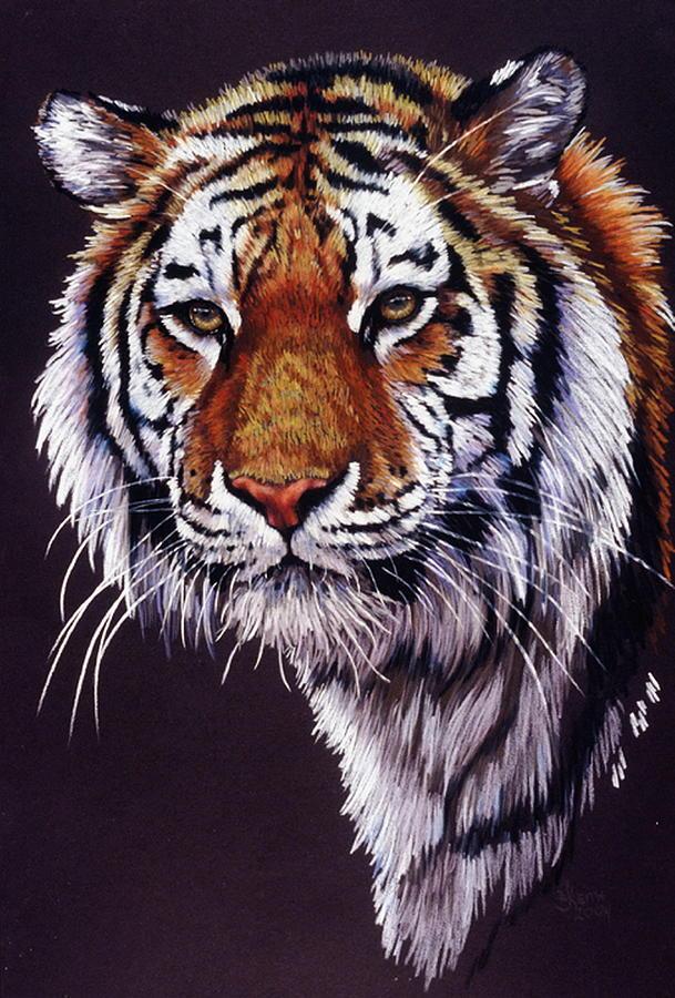 Tiger Drawing - Desperado by Barbara Keith