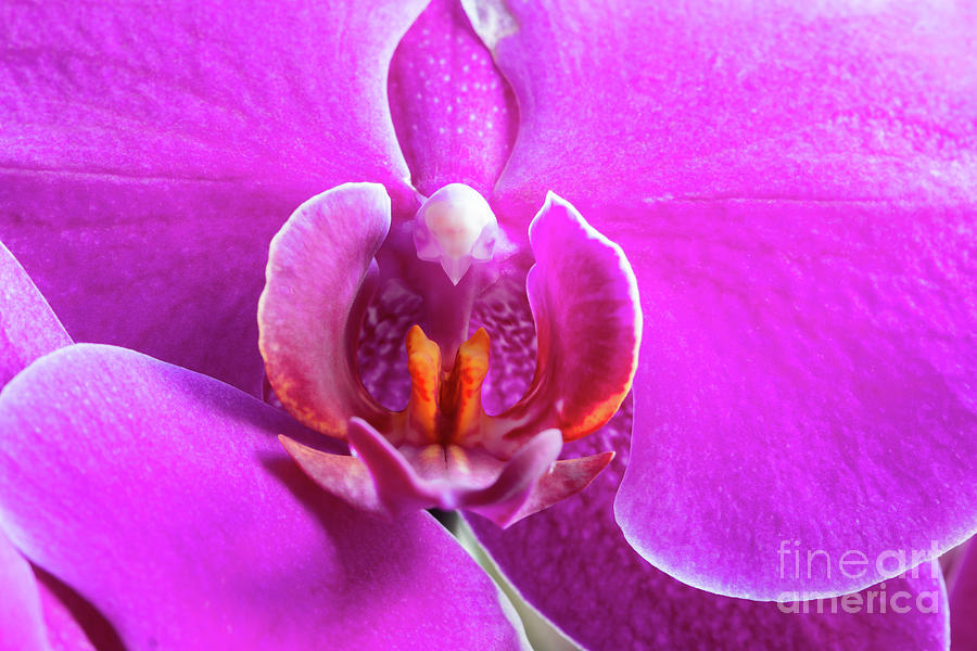 Detail Of Flowering Orchid Photograph