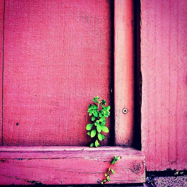 Pink Photograph - Determination by Julie Gebhardt