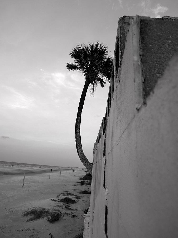 Palm Tree Photograph - Determination by Valeria Donaldson