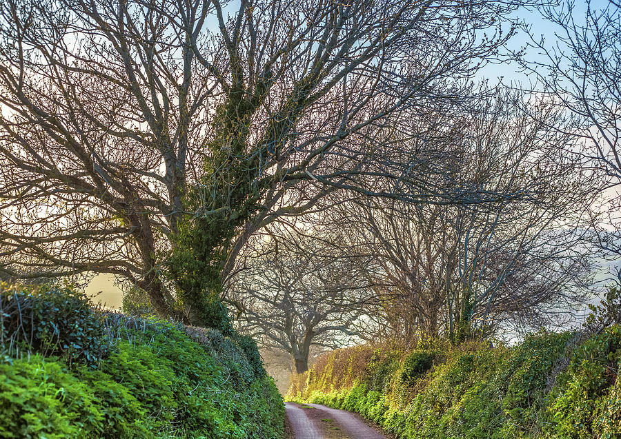Devon Photograph - Devon Lane by A J Paul