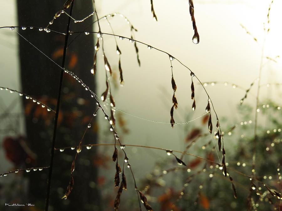 Dew Digital Art - Dew Drop Garland by Kathleen Illes