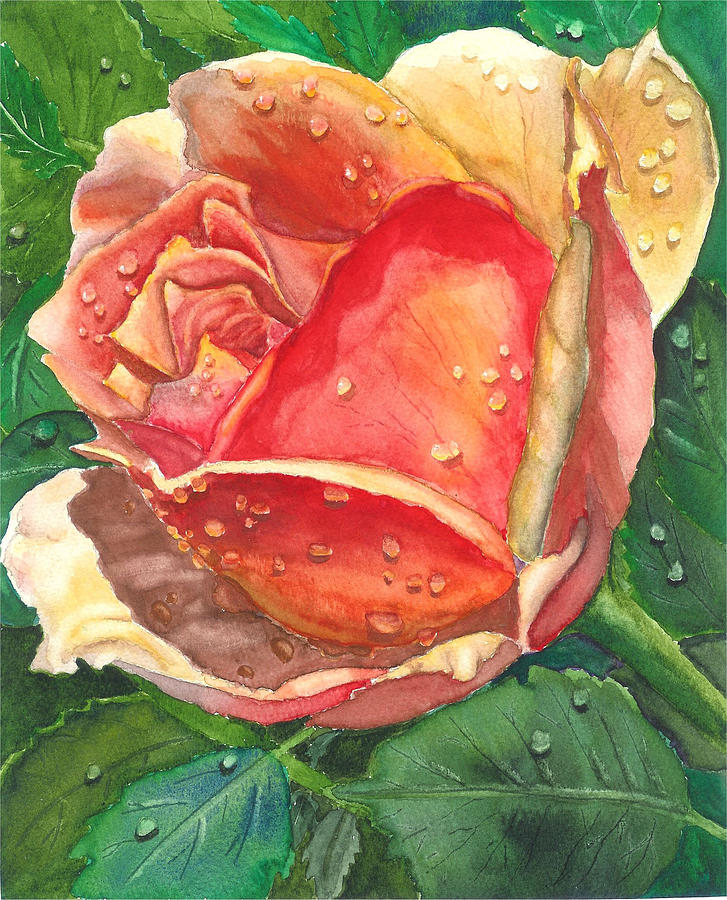 Dew Drop Rose Painting by Robert Thomaston
