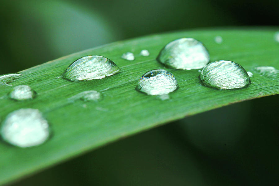 Macro Photograph - Dew Drops On A Blade Of Grass by Dan Pearce