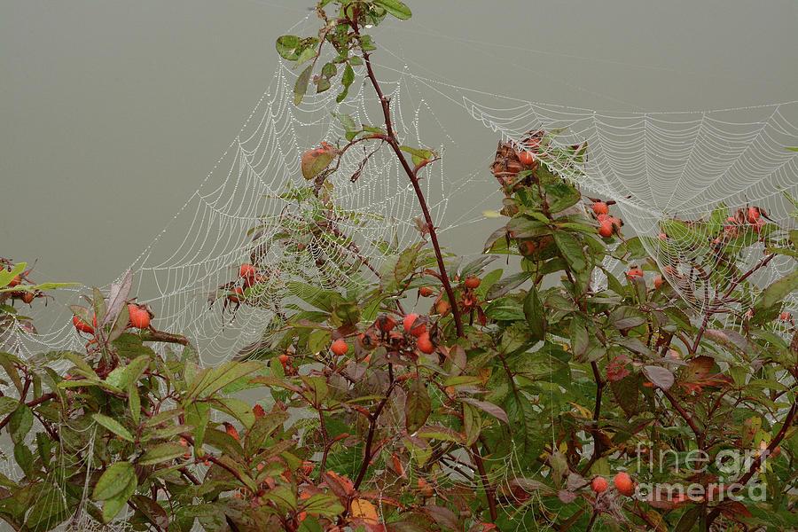 Dew on Webs by Charles Owens