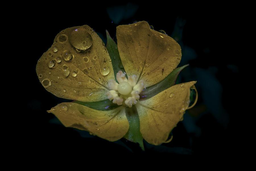 Macro Photograph - Dew to Drought 546 by Karen Musick
