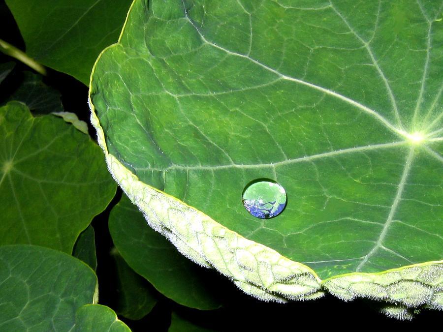 Dewdrop by Will Borden