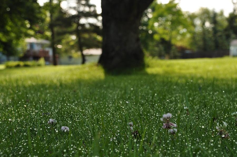 Dewy Grass Photograph by Mallory Jarosz