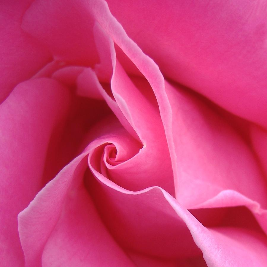 Rose Roses Flower  Macro Pink georgia O Photograph - Diagonal Of Rose by Jacqueline Migell