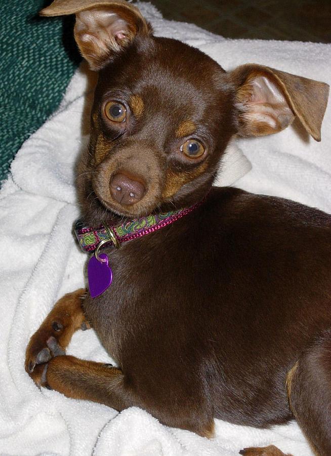 Cute Dog Photograph - Did You Call Me  by Stephanie  H Johnson