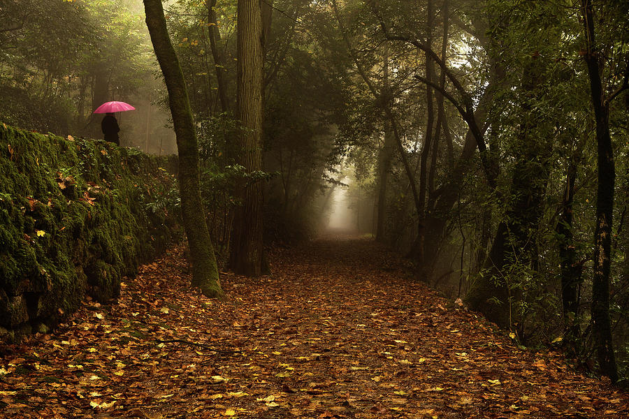 Woods Photograph - Diferent Paths by Jorge Maia