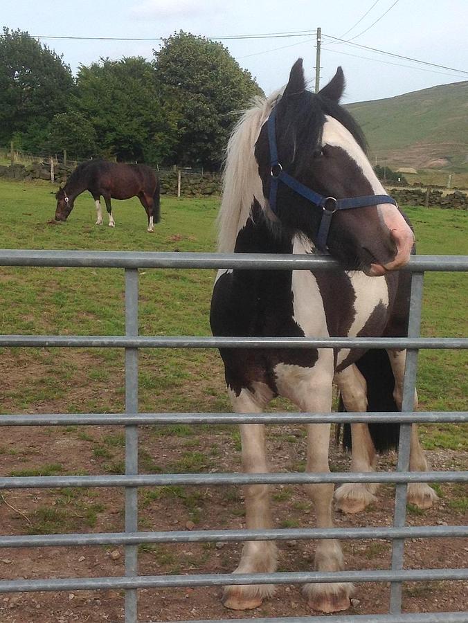Diggle Pony Photograph