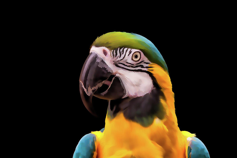 Digital Painting Of A Blue And Yellow Macaw Parrot Digital Art