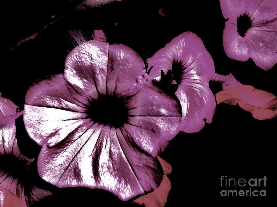 Contemporary Photograph - Digital Petunia by Marsha Heiken