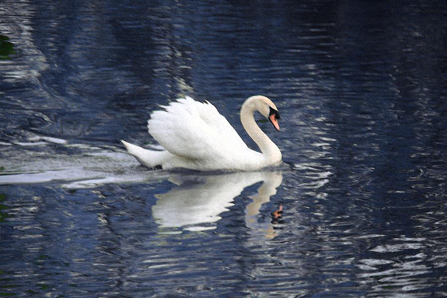 Swan Photograph - Digital Watercolor by Nicholas J Mast