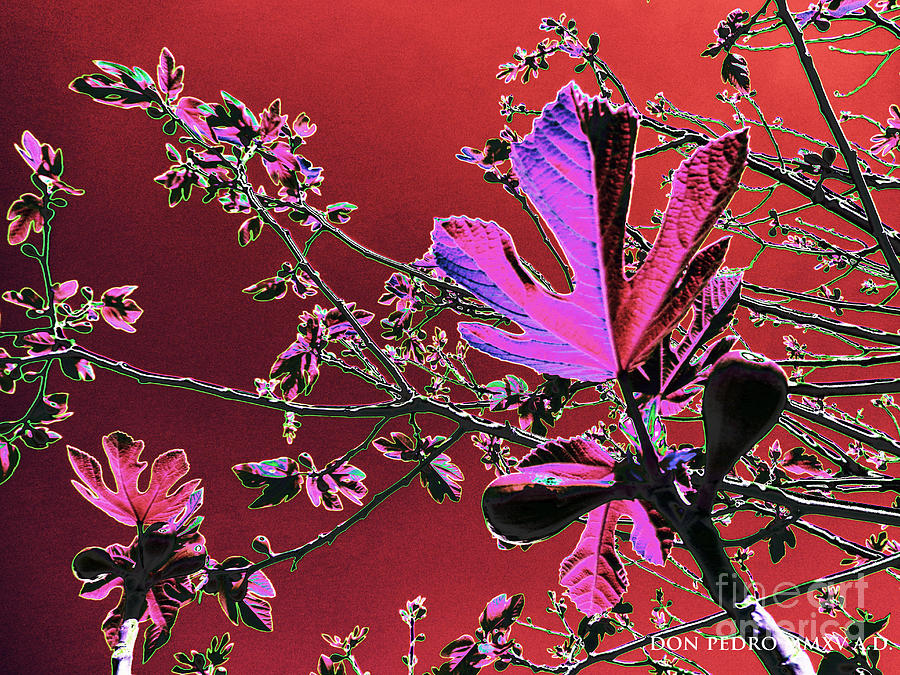 Leaves Digital Art - Figtree Leaves 3 by Don Pedro DE GRACIA