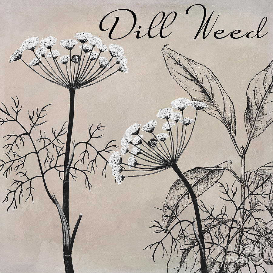 Dill Weed Painting - Dill Weed Flowering Herb by Mindy Sommers
